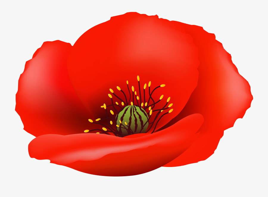 Poppy Flower Clipart Royalty Free - Poppy Flower No Background, Transparent Clipart