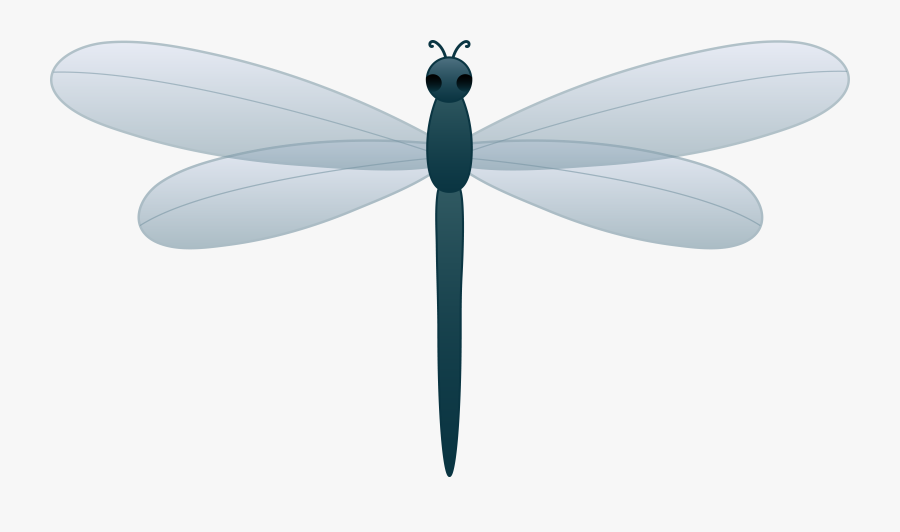 Dragonfly Clipart Free Download Clipart Free Clipart - Cartoon Clip Art Dragonfly, Transparent Clipart