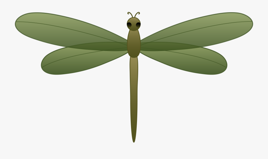 Cartoon Dragonfly Pictures - Realistic Dragonfly Free Clipart, Transparent Clipart