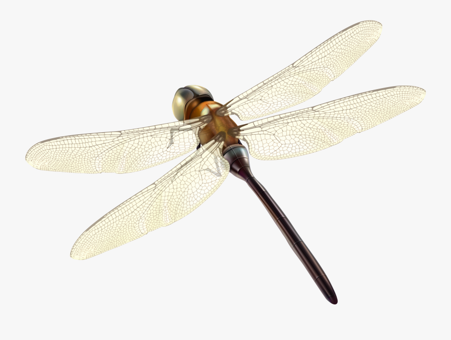 Dragonfly Png Clipart - Hawker Dragonflies, Transparent Clipart