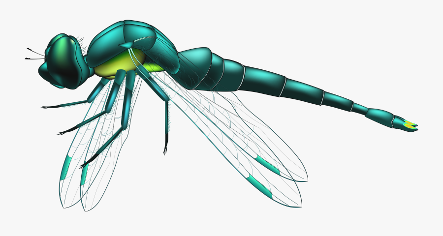 Dragonfly Blue Png Clip Art - Dragonfly Png, Transparent Clipart