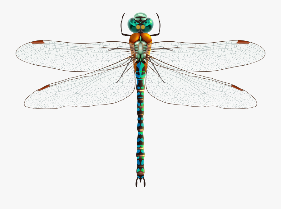 Dragonfly Png Clip Art - Dragonfly Design, Transparent Clipart