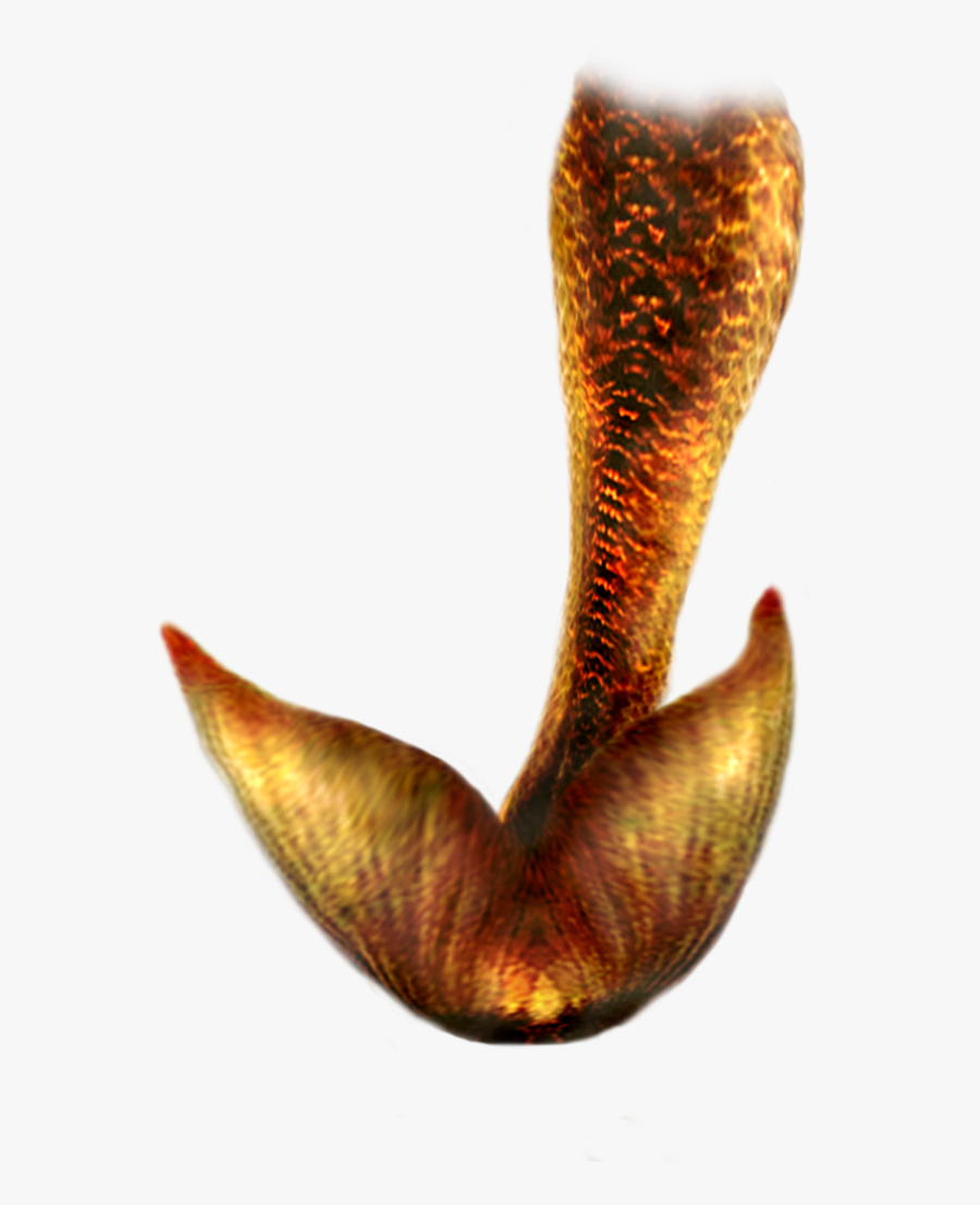 Mermaid Tail Png Hd - Mermaid Tail .png, Transparent Clipart