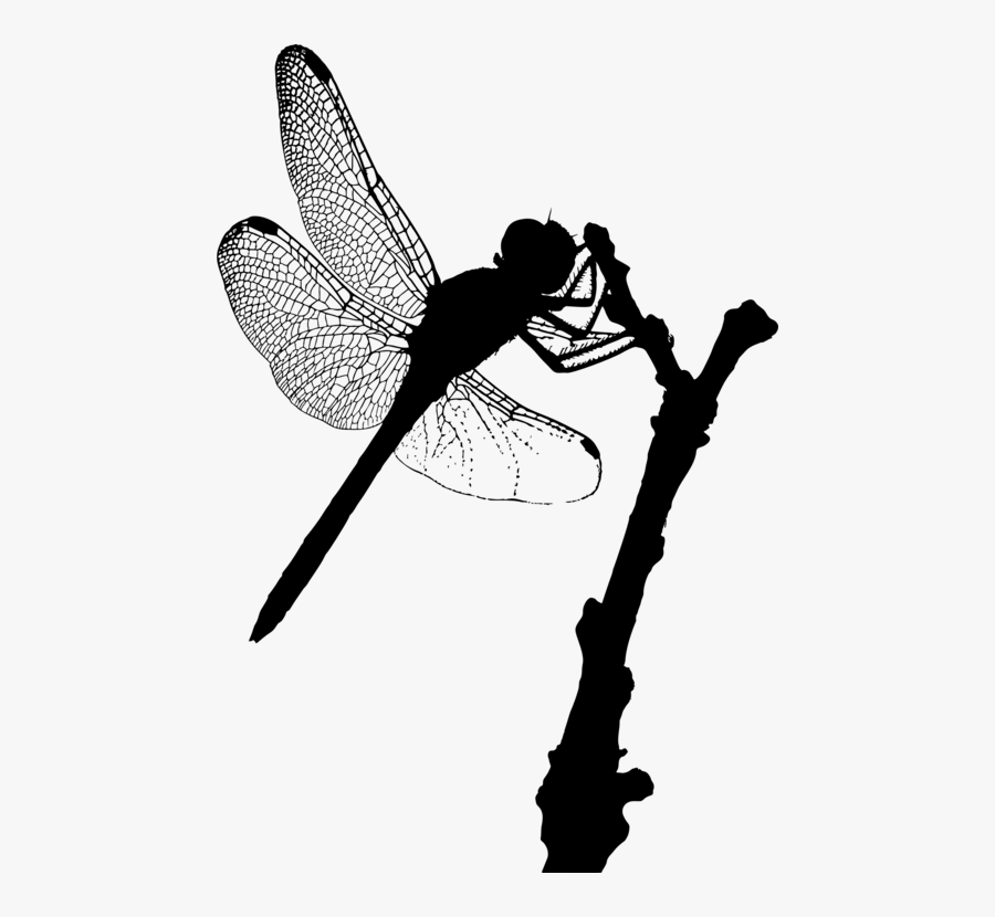 Fly,dragonfly,silhouette - Dragonfly Silhouette, Transparent Clipart