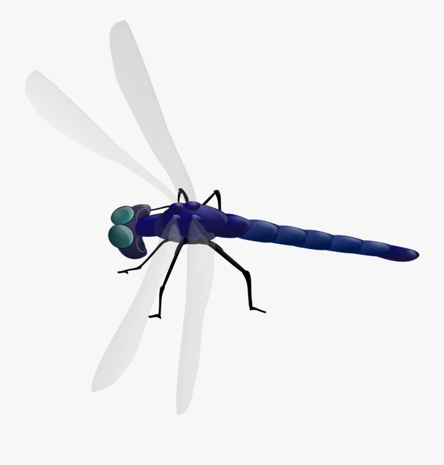 Dragonfly - Dragonfly Clipart Gif, Transparent Clipart