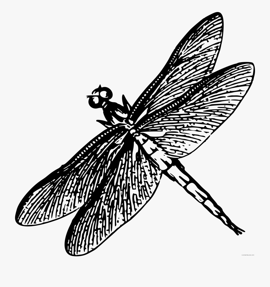 Vector Royalty Free Download Dragonflies Drawing Heart - Drawing Of Dragonfly Black And White, Transparent Clipart
