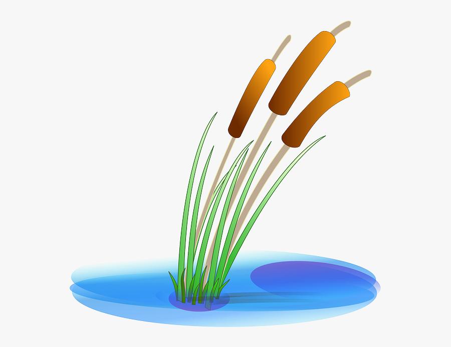 Download Hd Water Plants - Pond Clipart, Transparent Clipart