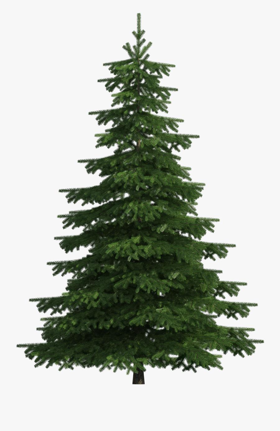 Realistic Pine Tree Png Clip Art - Transparent Pine Tree Png, Transparent Clipart