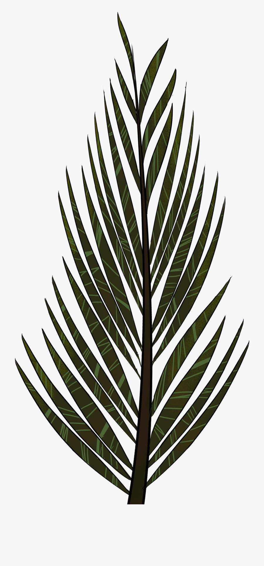 Pine Tree Clipart Fern Tree - Pine Tree Leaves Draw, Transparent Clipart