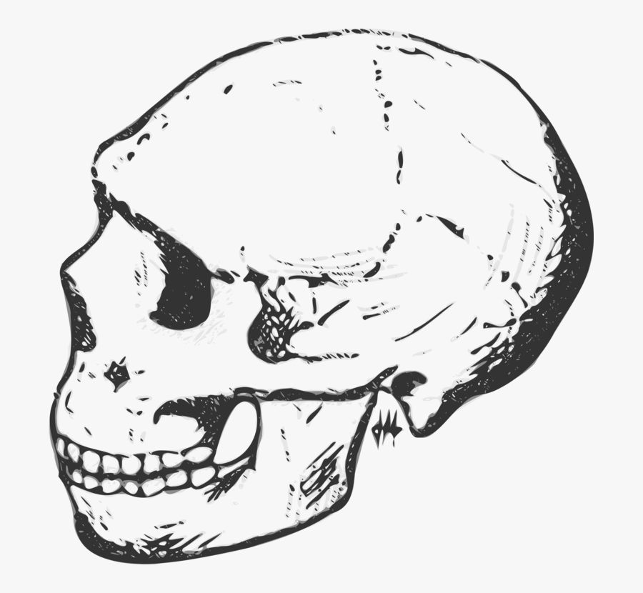 Skull Human Skeleton Free - Raven Illustration Vintage Book, Transparent Clipart