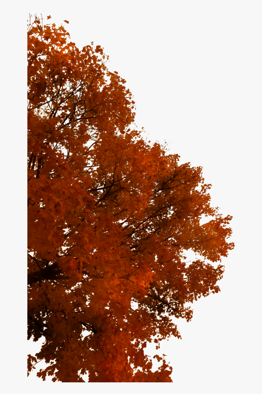 Tree Autumn Branch - Autumn Tree Branch Png, Transparent Clipart