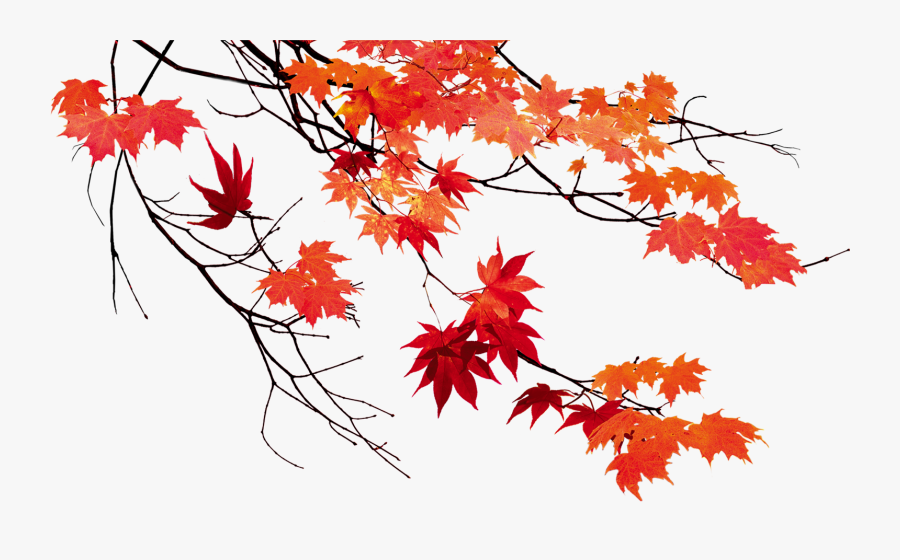 Transparent Autumn Trees Png - Autumn Leaves Transparent Background, Transparent Clipart