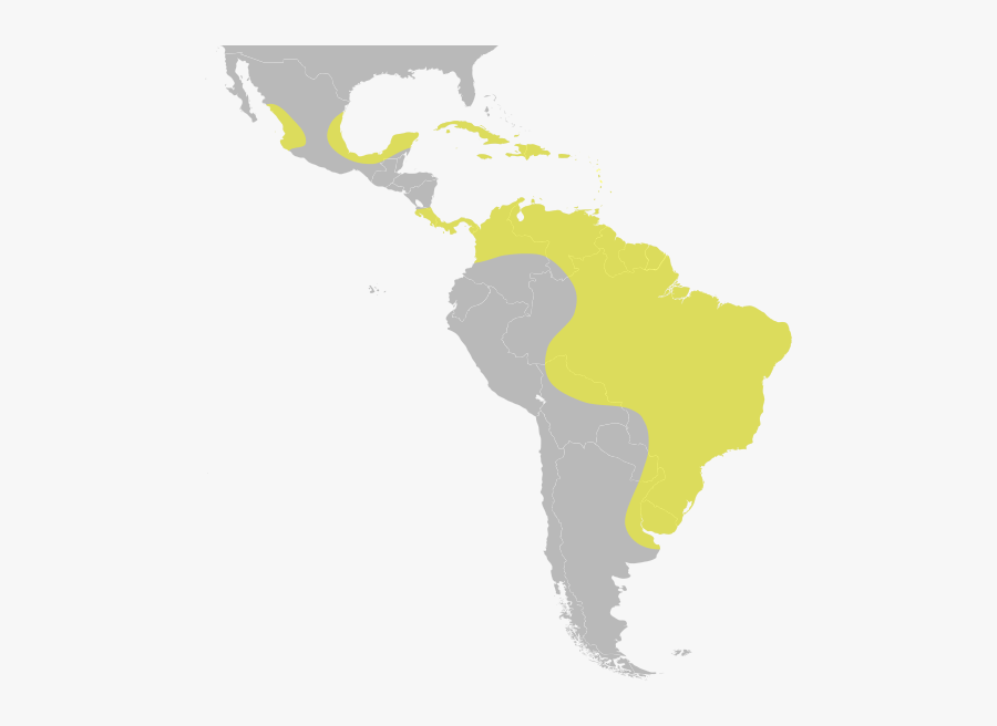 United Central Subregion States Latin America South - Latin America Map Svg, Transparent Clipart