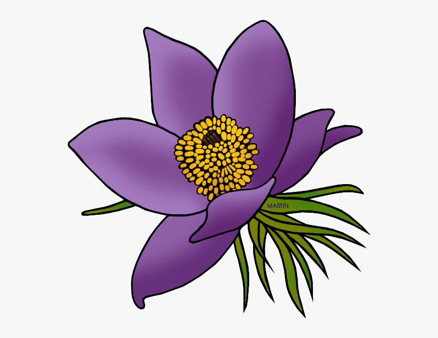 State Floral Emblem Of South Dakota - South Dakota State Flower Drawing, Transparent Clipart