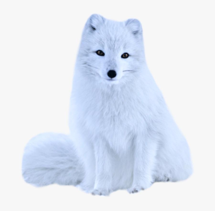 Transparent White Fox Png - Arctic Fox, Transparent Clipart