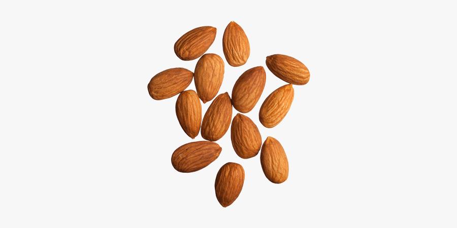 Almond Png Transparent Images - Marcona Almonds Vs Almonds, Transparent Clipart