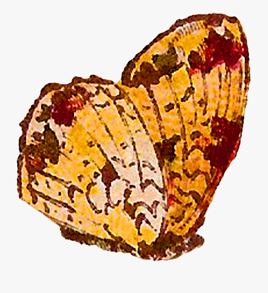 Spring Clipart Digital - Brush-footed Butterfly, Transparent Clipart