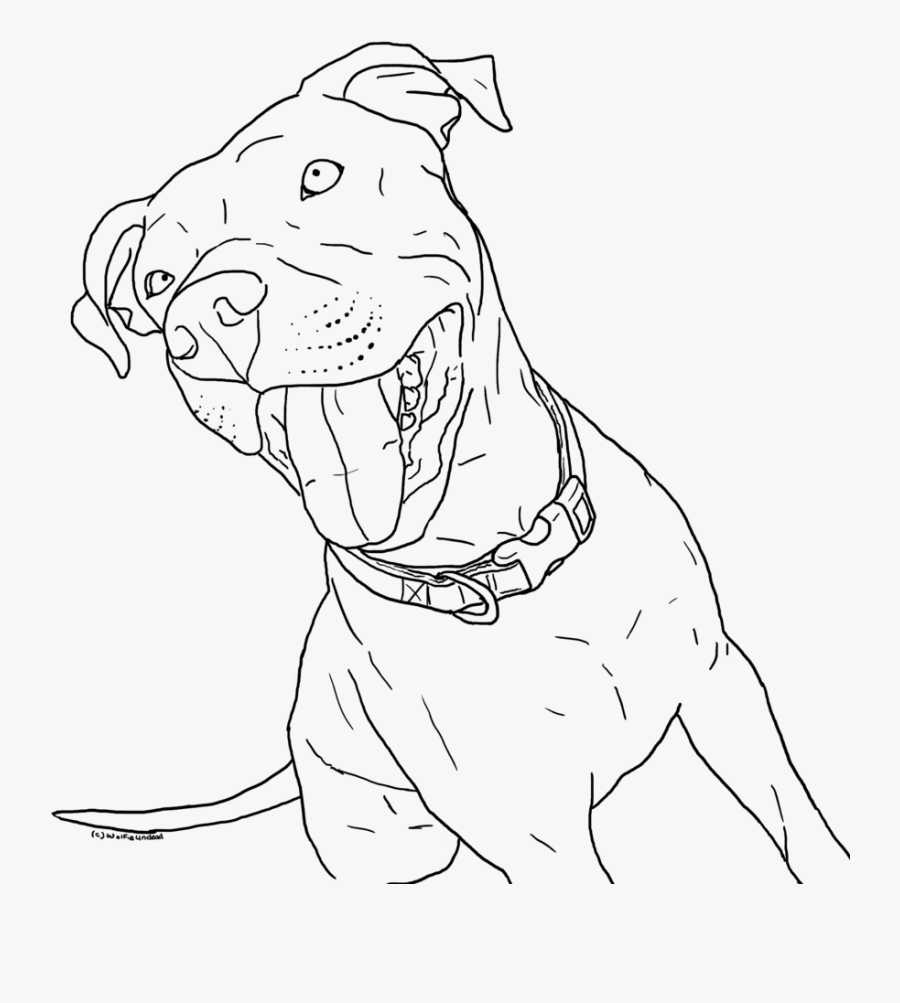 Dog Drawing Face Pitbull - Pitbull Mix Coloring Pages, Transparent Clipart