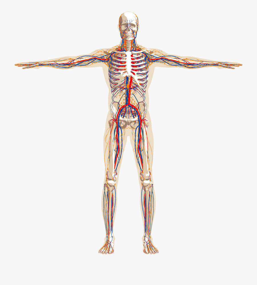 Png Image With Transparent Background - Application Of Collagen Biomaterials, Transparent Clipart