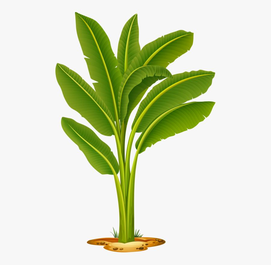 Transparent Plant A Tree Clipart - Banana Tree Images Png, Transparent Clipart