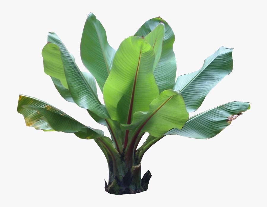Clip Art Pictures And Names Plant - Tropical Plant Photoshop, Transparent Clipart