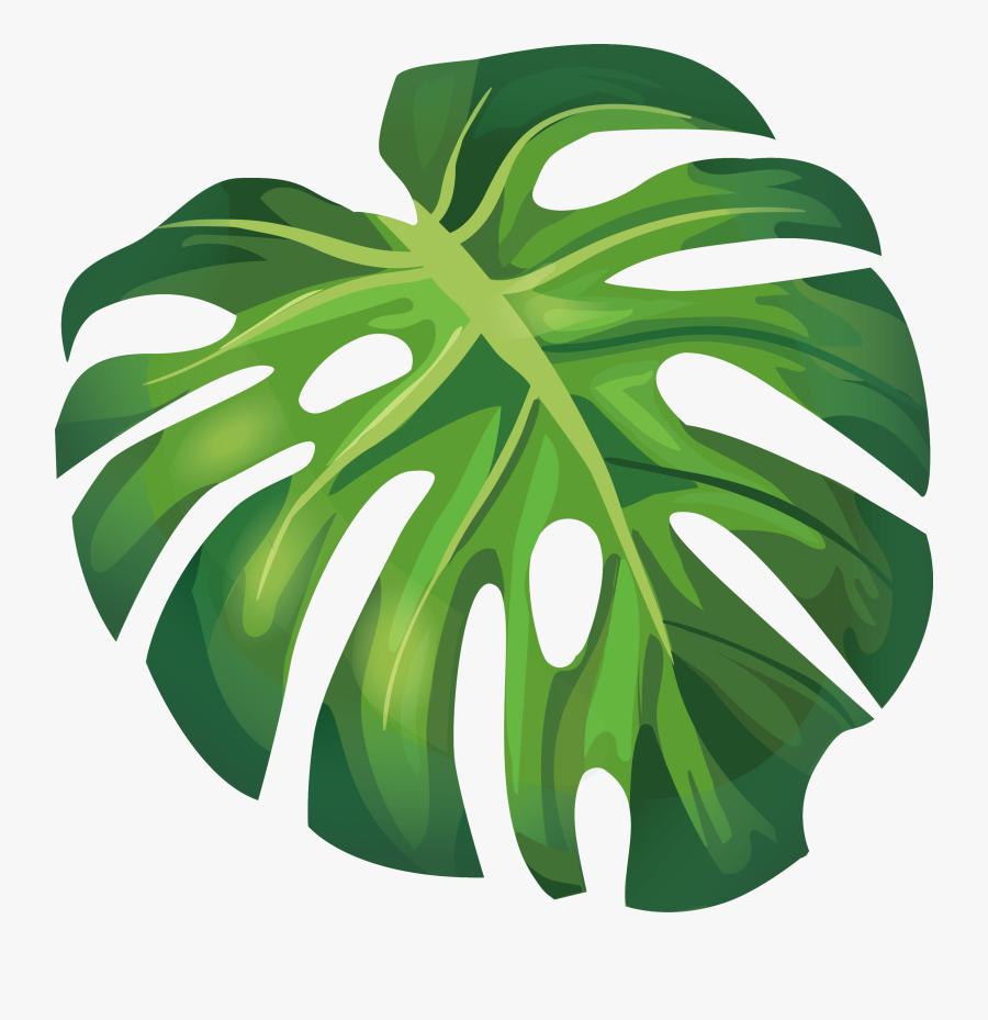 Transparent Banana Leaf Png - Monstera Leaf Vector Png, Transparent Clipart