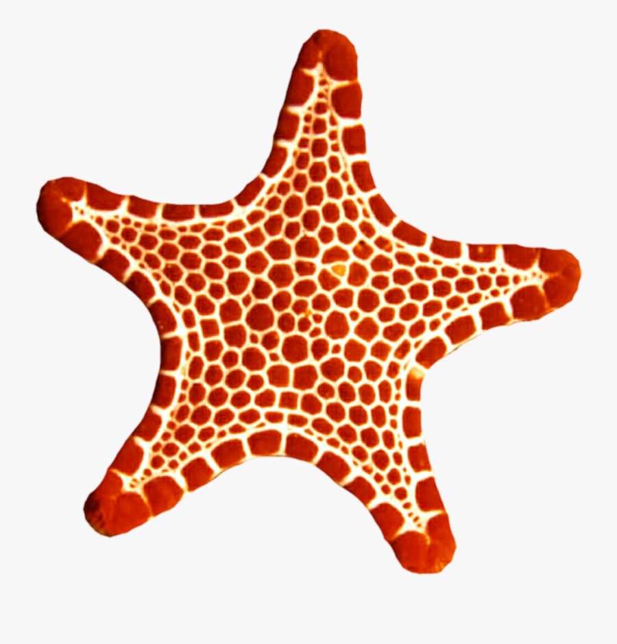 Sea Star Png Photo - Transparent Red Sea Star, Transparent Clipart