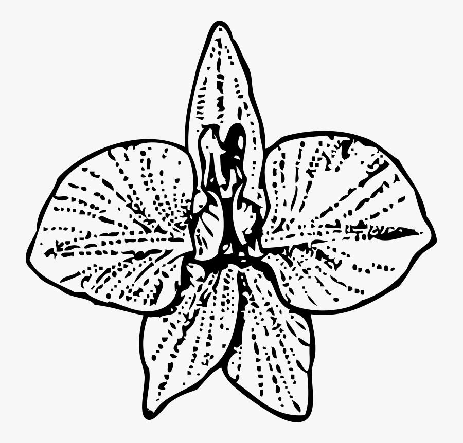 Larkspur - Larkspur Flower Drawing Art, Transparent Clipart