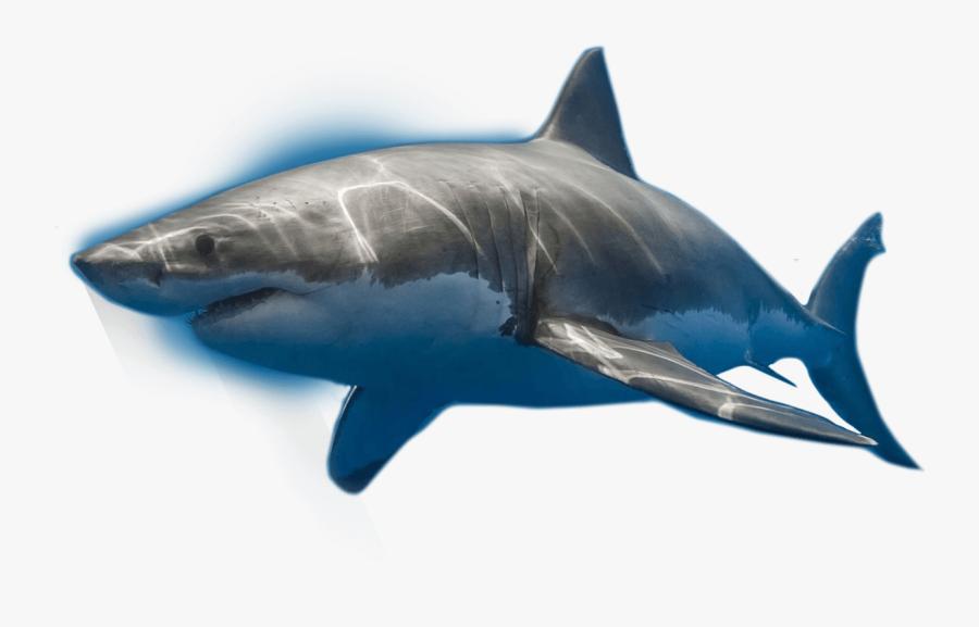Shark,fish,fin,great White Shark,fish,marine Biology,marine - Great White Shark, Transparent Clipart