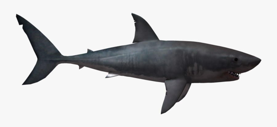 Shark Png - Great White Shark No Background, Transparent Clipart