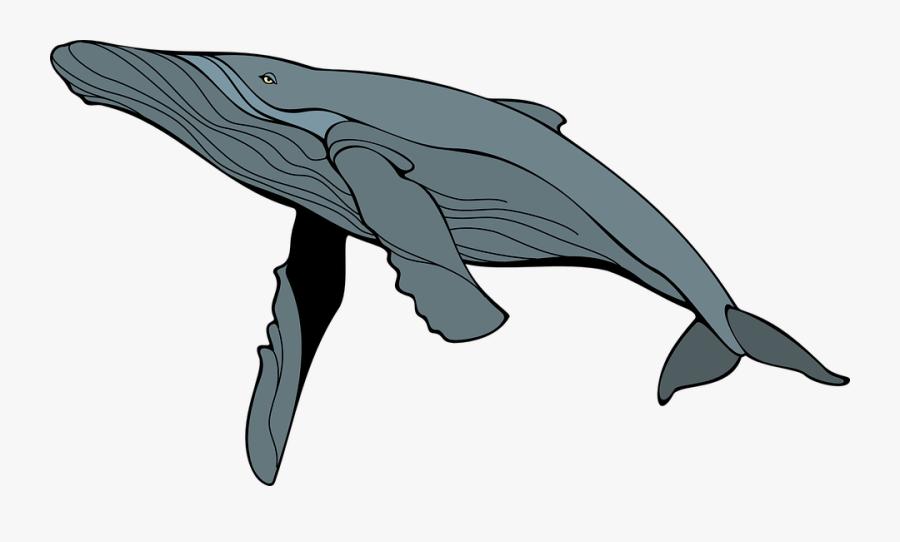 Humpback Whale Clipart At Getdrawings - Humpback Whale Clipart, Transparent Clipart