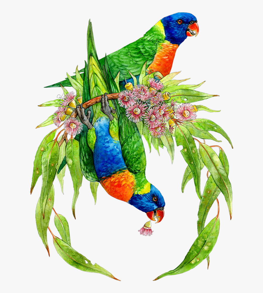 Transparent Guacamaya Png, Transparent Clipart