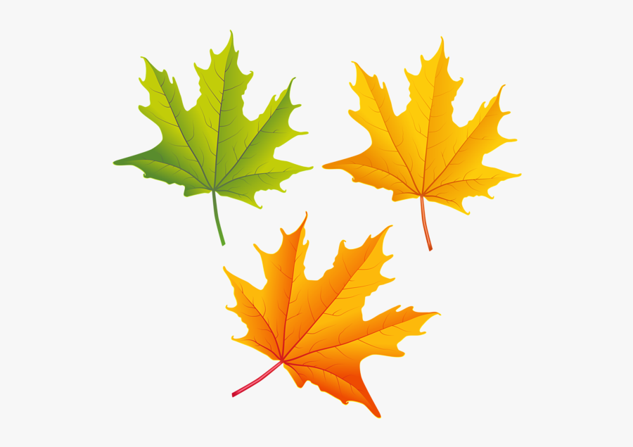 Clipart Images, Autumn Leaves, Photoshop, Clip Art, - High Resolution Fall Leaves, Transparent Clipart