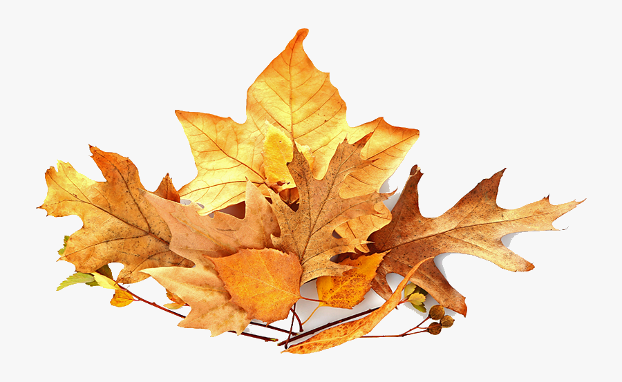 Fall Leaves Pile Png, Transparent Clipart