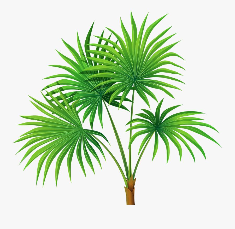 Palm Tree Leaves Clipart , Png Download - Palm Plant Clipart, Transparent Clipart