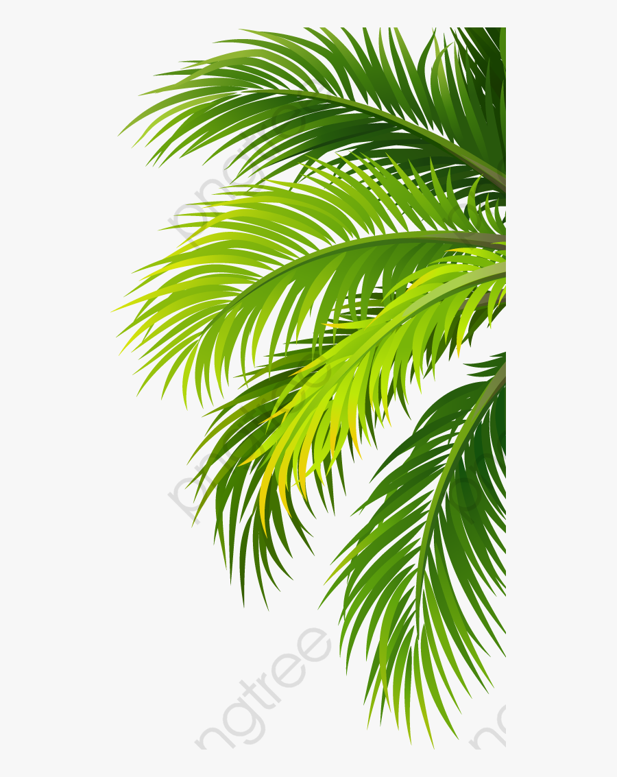 Transparent Palm Leaf Png - Palm Tree Leaf Vectors, Transparent Clipart