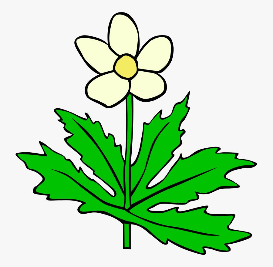 Plant,flora,leaf - Plants And Leaves Clipart, Transparent Clipart