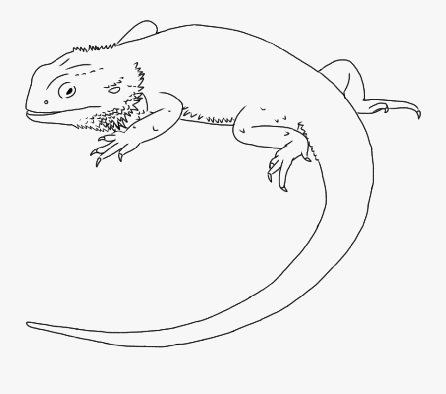 Bearded Dragon Black And White Clipart Draw A Bearded Dragon Free Transparent Clipart Clipartkey