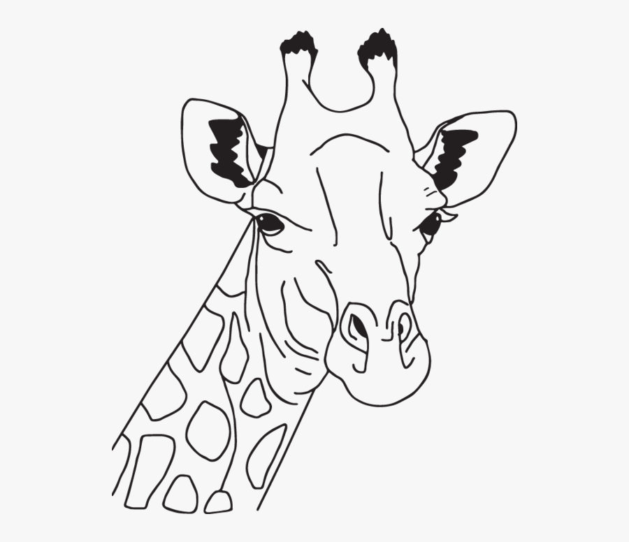 giraffe coloring page head  free transparent clipart