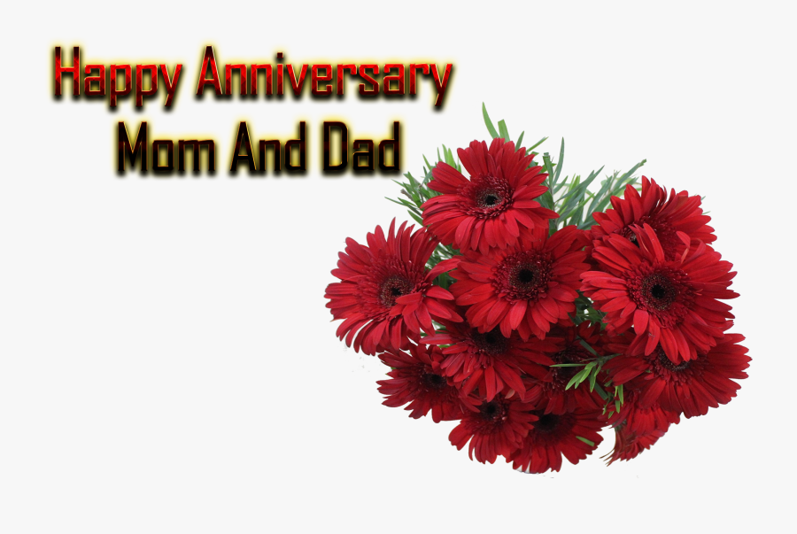 Happy Anniversary Mom And Dad Png Free Background Anniversary Background Png Free Transparent Clipart Clipartkey
