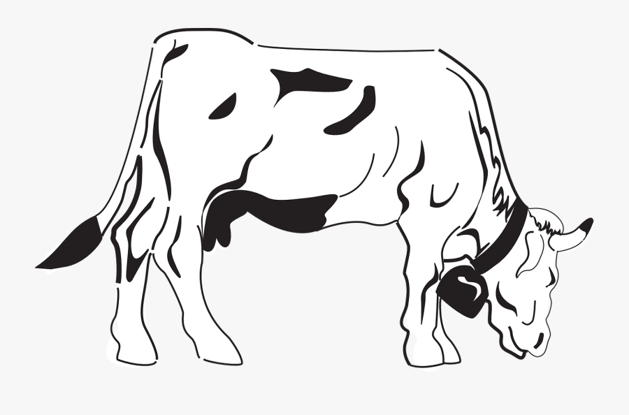 Cow, Grazing, Eating, Livestock, Cattle, Farm, Animal - Coloring Pages Of Cow, Transparent Clipart