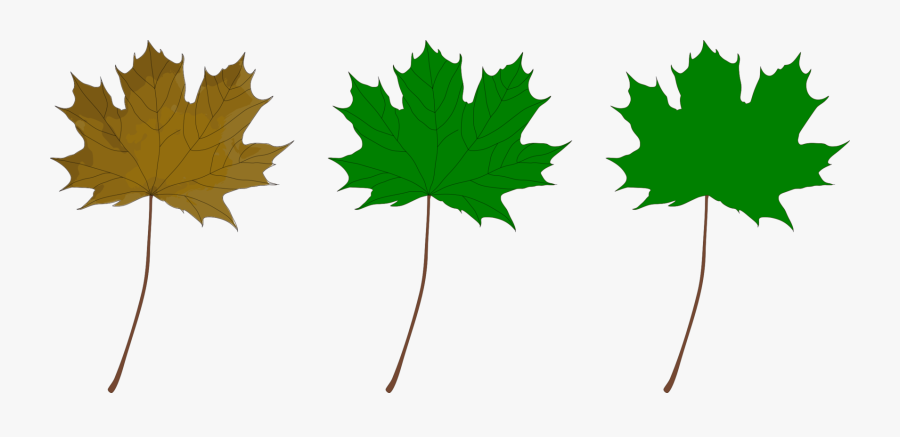 Plant,leaf,tree - Green Maple Leaf Clip Art, Transparent Clipart