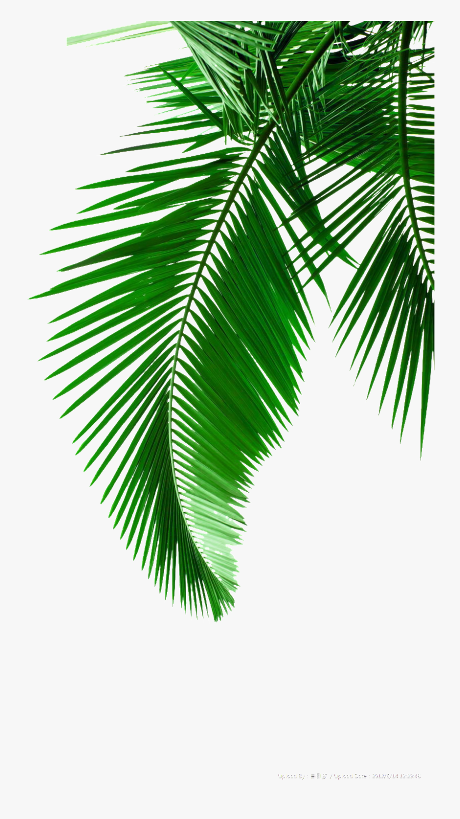 Creative Green Leaf Drawing Transparent Decorative - Black And White Palm Tree Leaves, Transparent Clipart