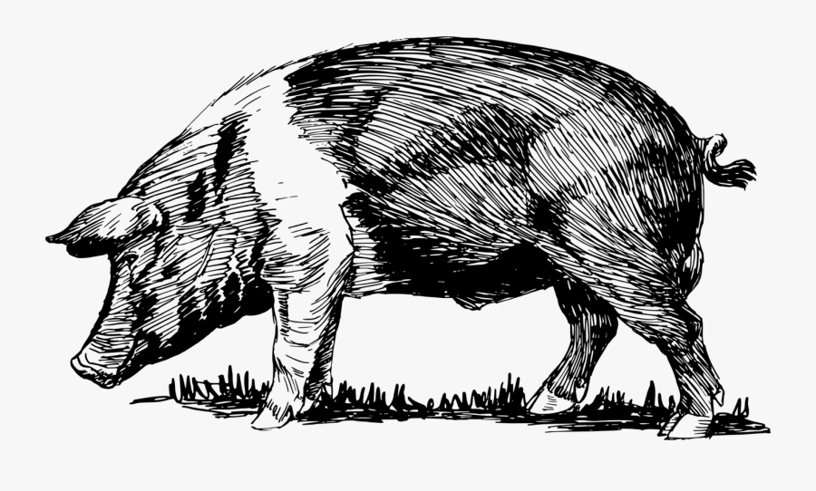 Wild Boar,wildlife,cattle Like Mammal - Hog Png, Transparent Clipart