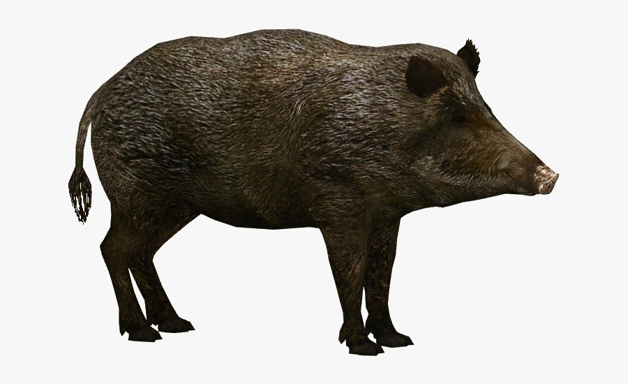 31484 - Wild Boar Png, Transparent Clipart
